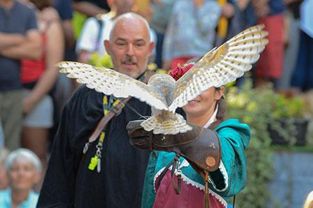 Falconeria - spettacoli medioevali